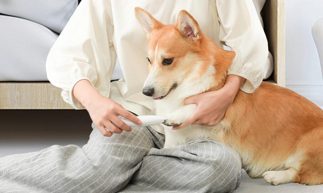 Dies ist der neue Tierhaarschneider, den Xiaomi zum Verkauf anbietet und den Sie bereits auf AliExpress kaufen können