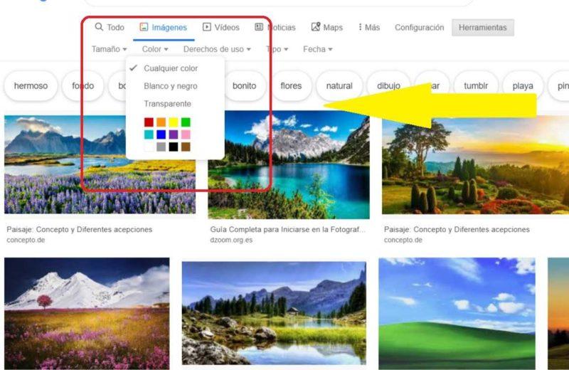 Bilder Google Suchen